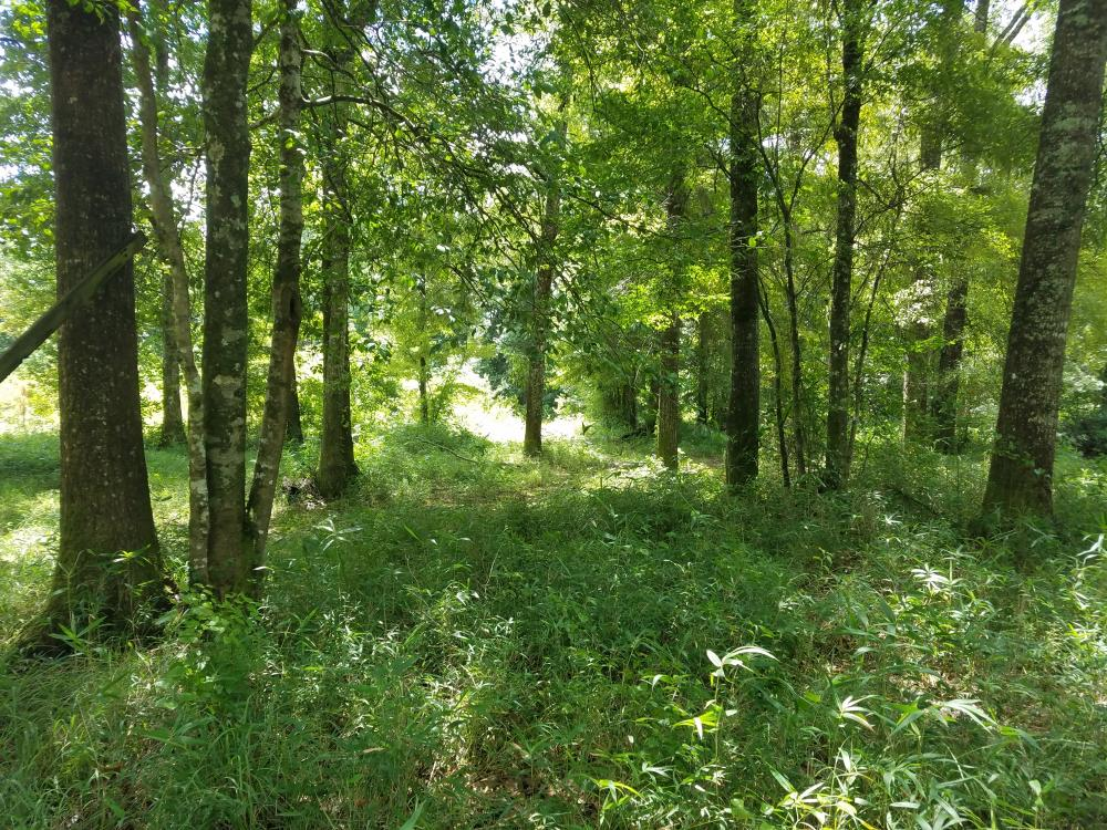 Pea River Hunting/Timber Tract