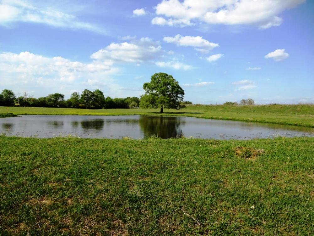 Lakes, Large Oaks, Fenced with Improved Pasture