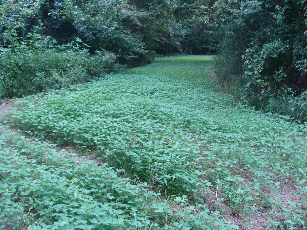 Lonoke County Recreational and Hunting Tract, 40 acres