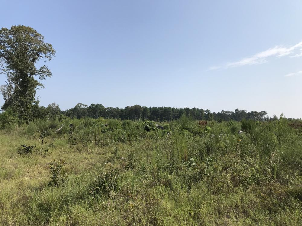 Young Pine Plantation Investment in Morehouse Parish, LA