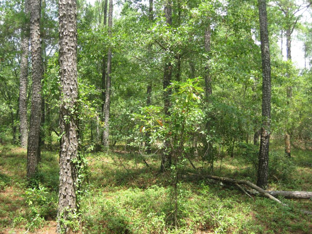 Fairview Crossroads Homesite and Timber Tract in Lexington County, SC