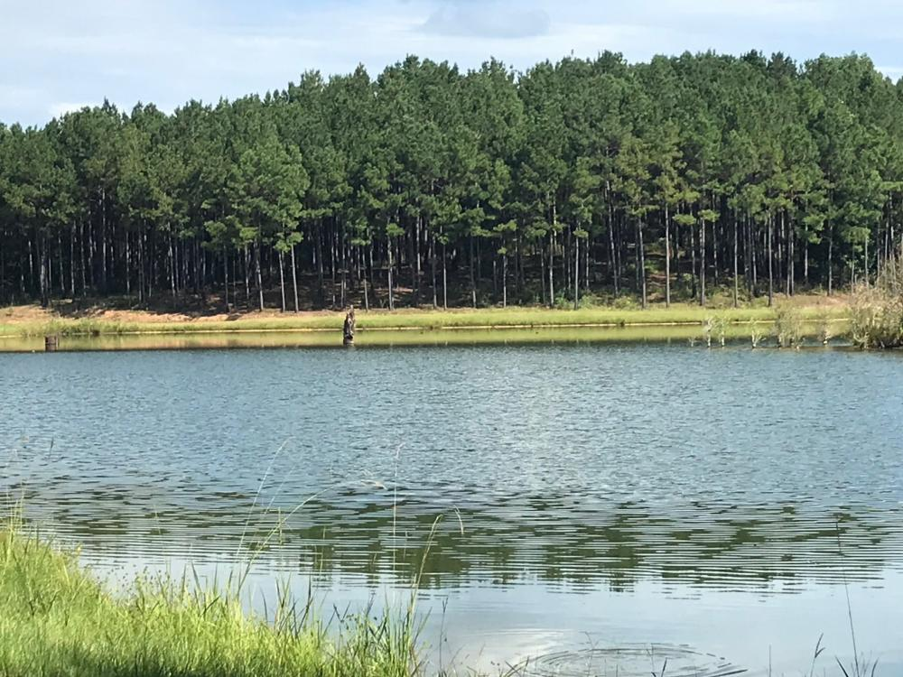 Sneads Creek Recreational Tract in Pickens County, AL