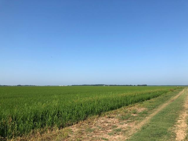 228+/- Acres Rice Farm & Duck Hunting