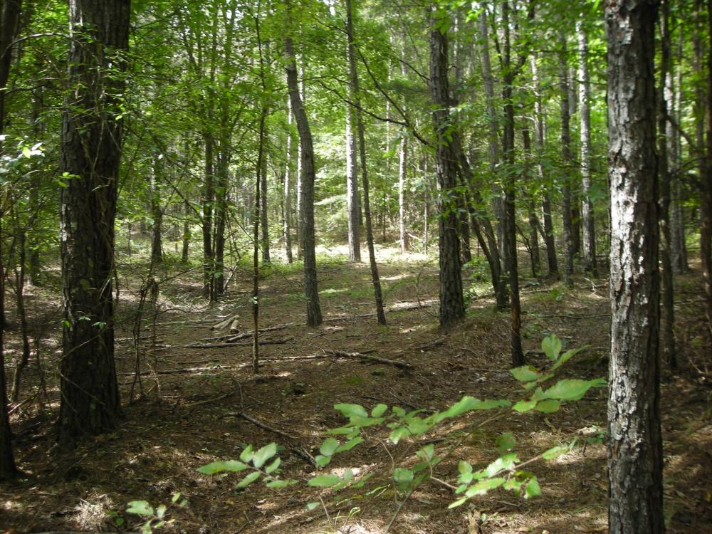82+ Acre Recreational/Residential/Hunting Land off Hwy 27 in Floyd County, GA