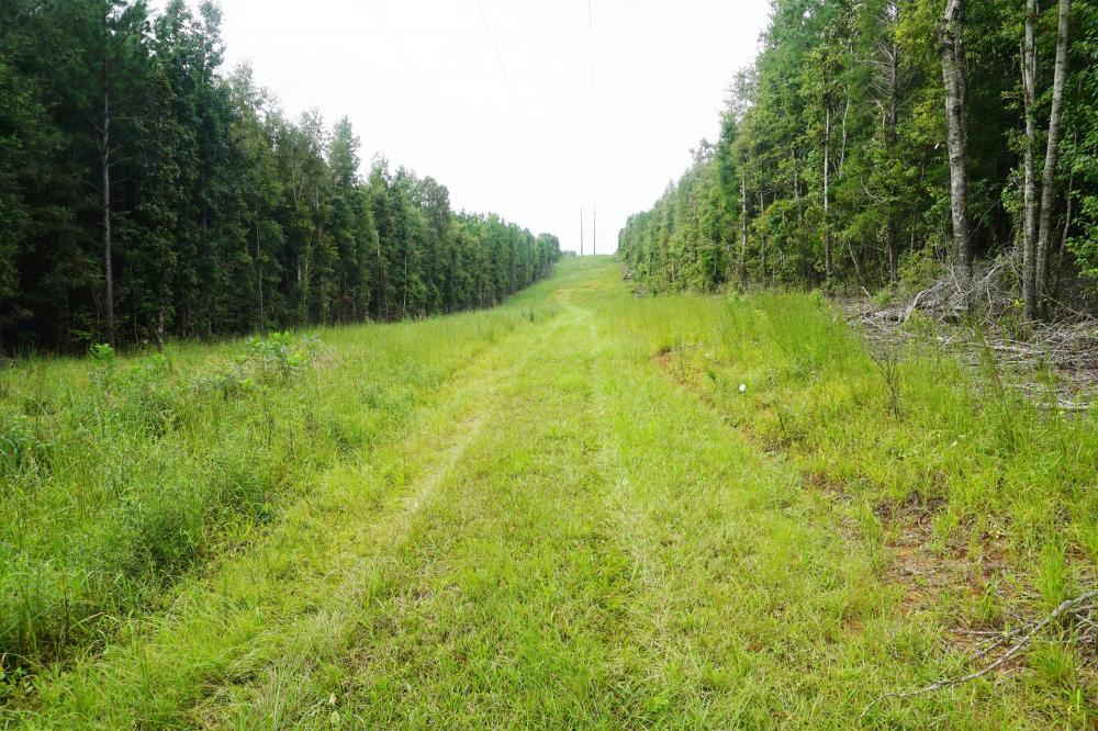 Colwell Creek Hunting & Timber Tract in Hale County, AL