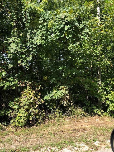 14.29 Wooded Acres in Southern Kentucky.  Great Recreational Opportunity! in McCreary County, KY