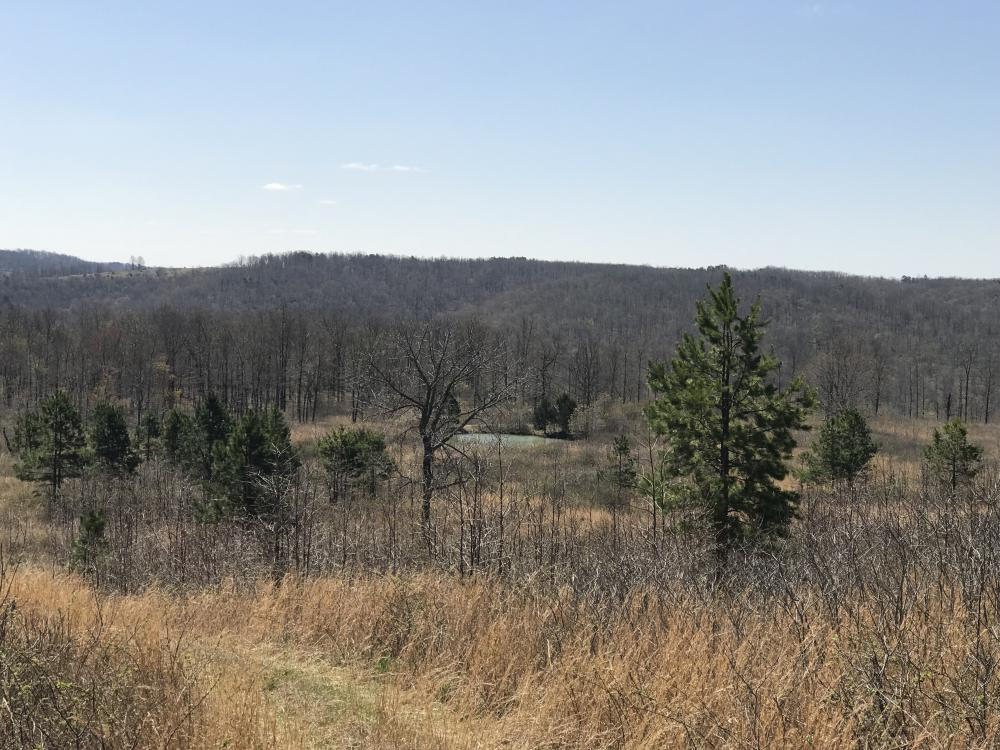 156+/- Acres Deer & Turkey Hunting Property with Cabin