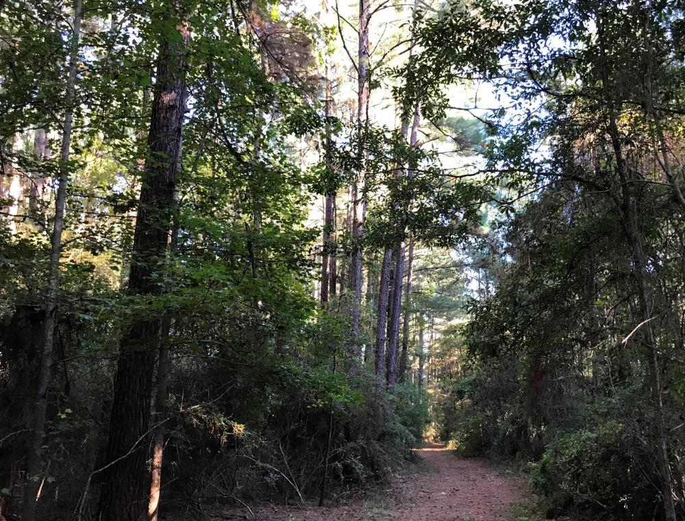 Oloh - Bellevue Residential Tract  in Lamar County, MS