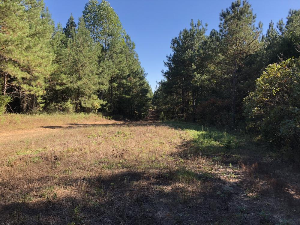 Bee Mountain Timber investment and Hunting Property in Marion County, AL