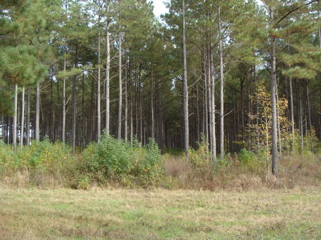 120+/- Acres CRP & Hunting Property in Prairie County, AR