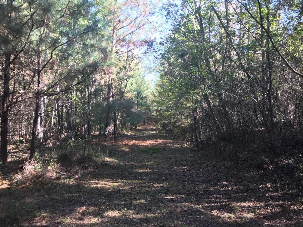 Sand Springs Road Fayette Homesite in Fayette County Alabama
