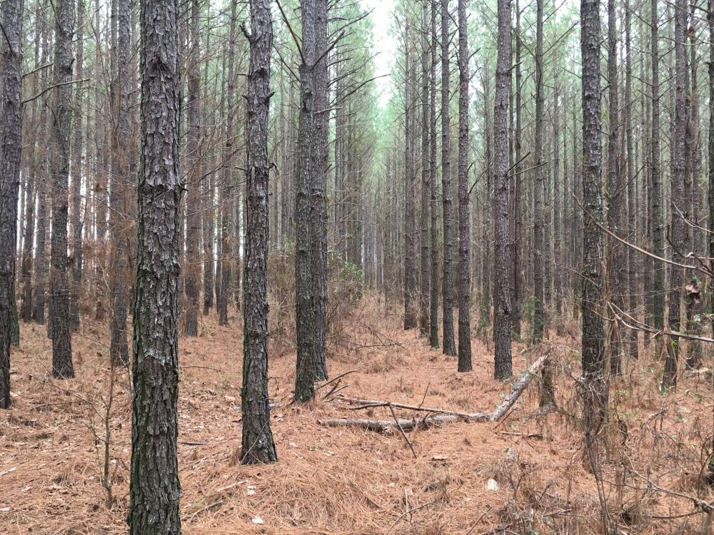 Small Acreage Hunting Tract with Timber