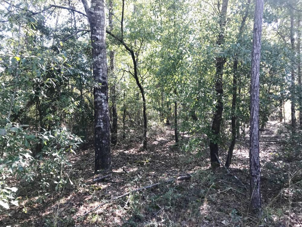 Bells Crossroads Hunting Tract in Barbour County, AL