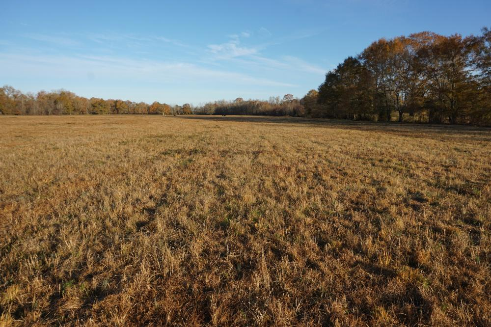 Lower Hull Road Pasture Land in Tuscaloosa County, AL