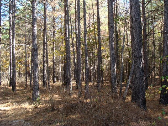 64 acres, timber & hunting land in Clark County, AR