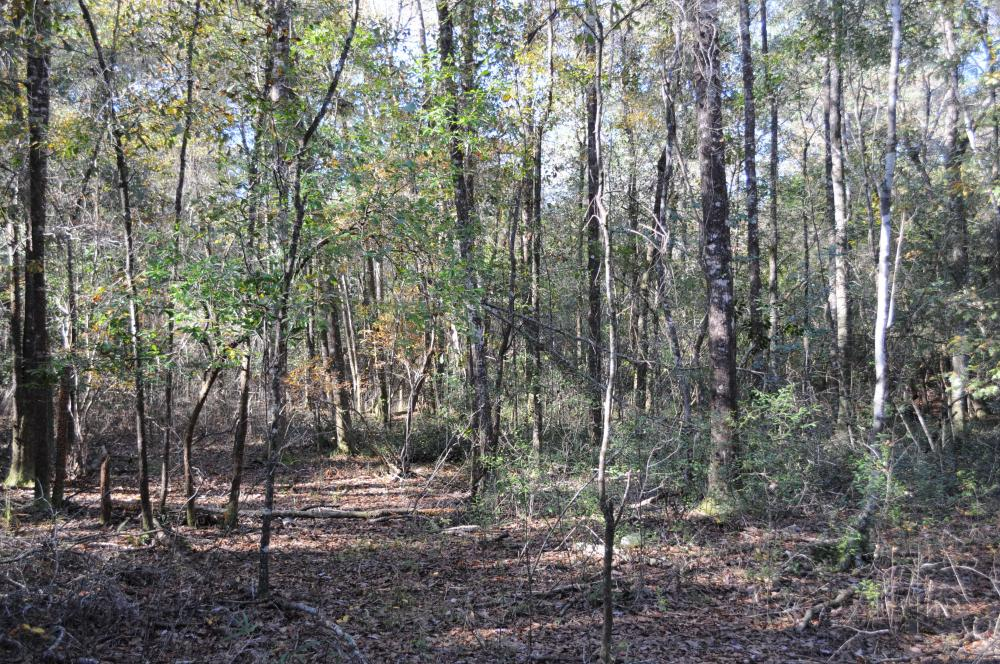 Blackwater River Headwaters Hunting Retreat in Escambia County, AL