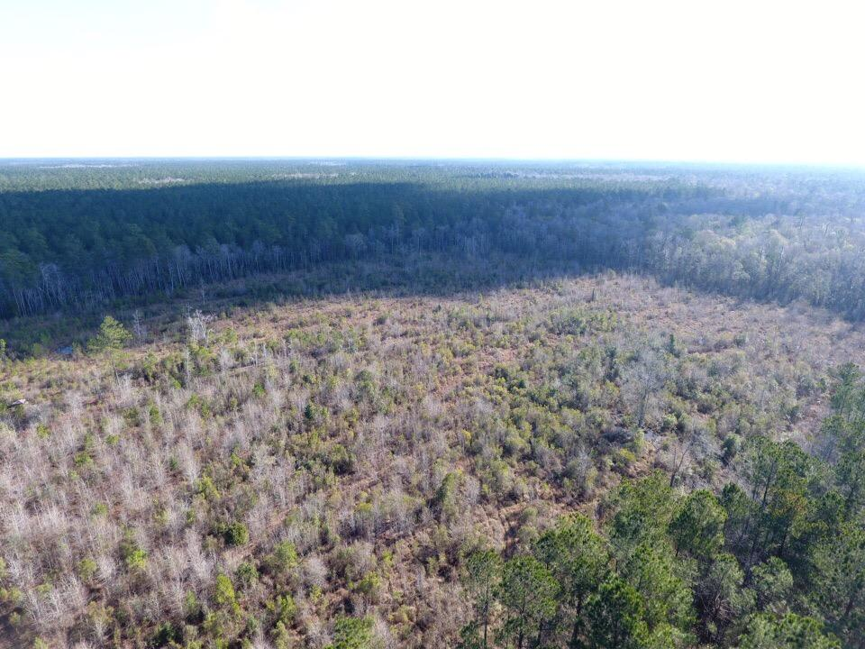 Bonneau National Forest Land in Berkeley County, SC