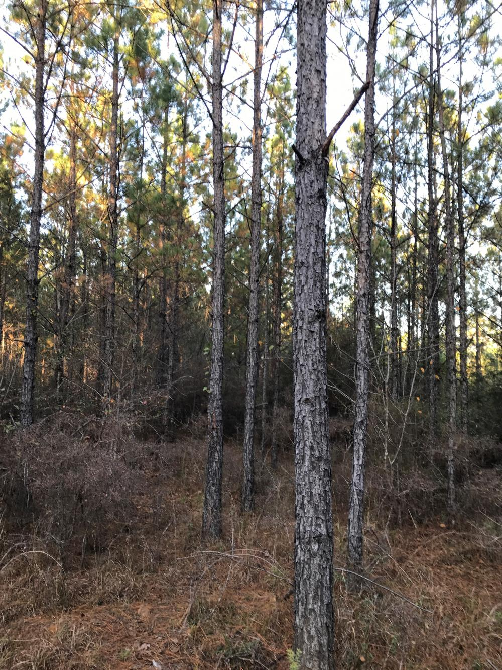 Pinhook Road Timber and Hunting Property