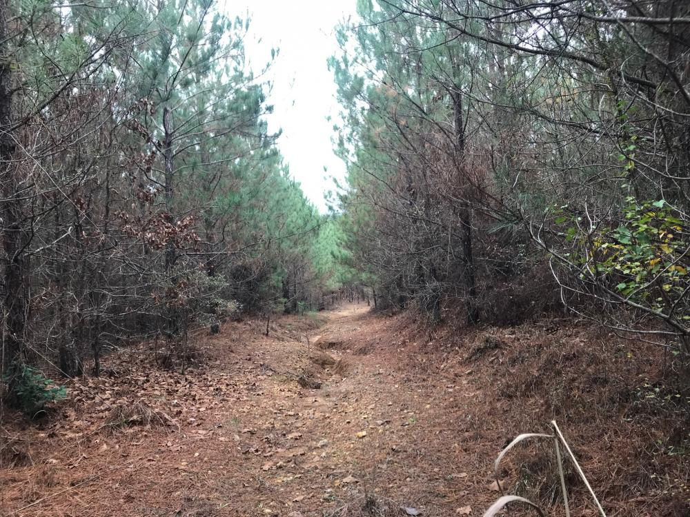 I-22 Hunting & Timber Tract in Marion County, AL
