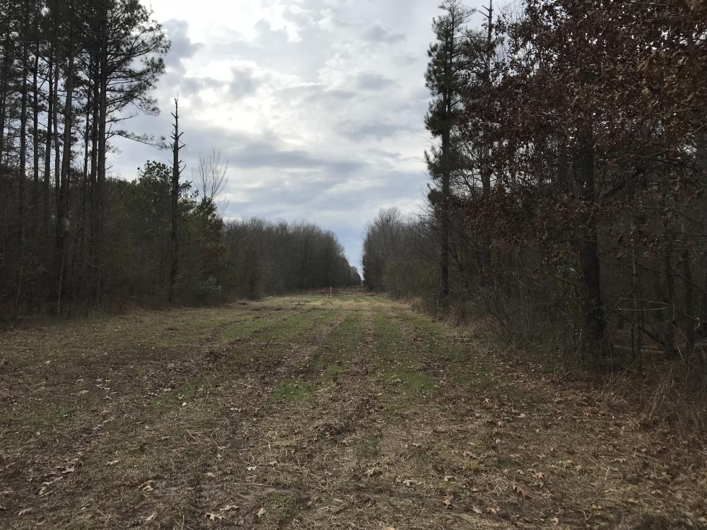 Timber Tract and Big Deer Hunting, near Pioneer, La. in West Carroll Parish, LA