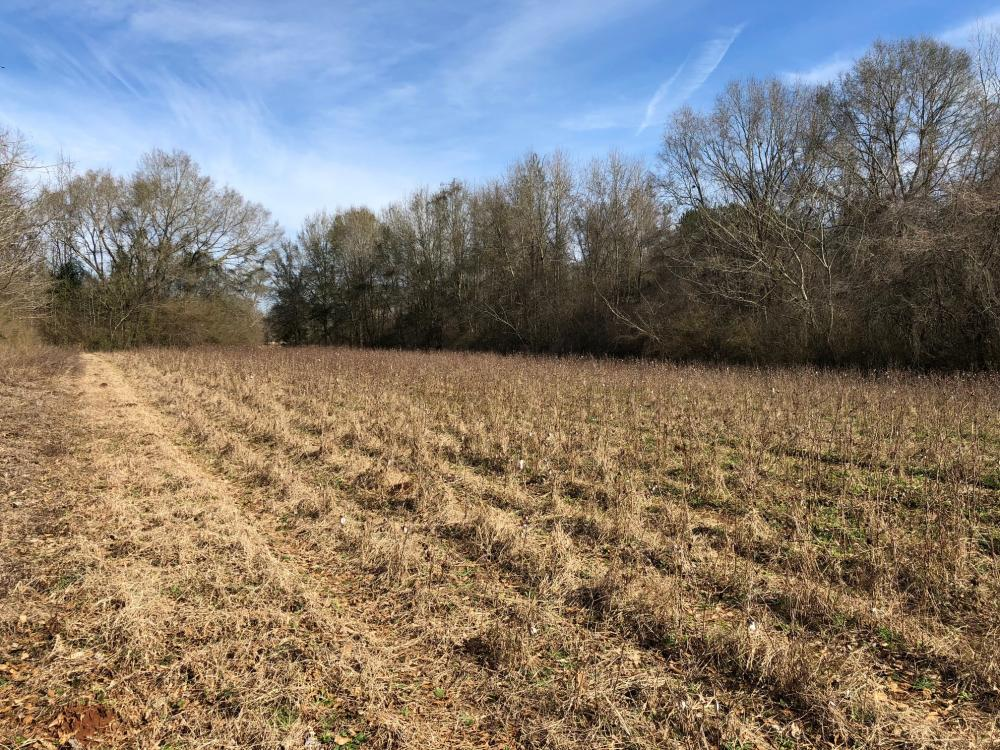 Evergreen Homesite in Conecuh County, AL
