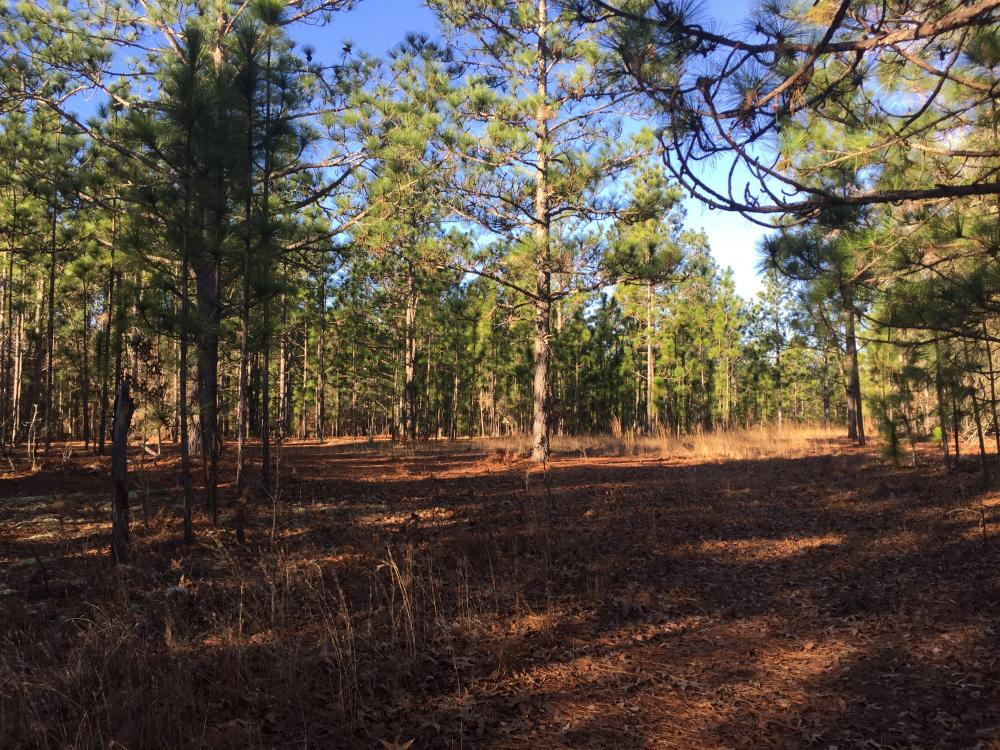 Cassatt Hunting and Recreation with Multiple Homesites in Kershaw County, SC