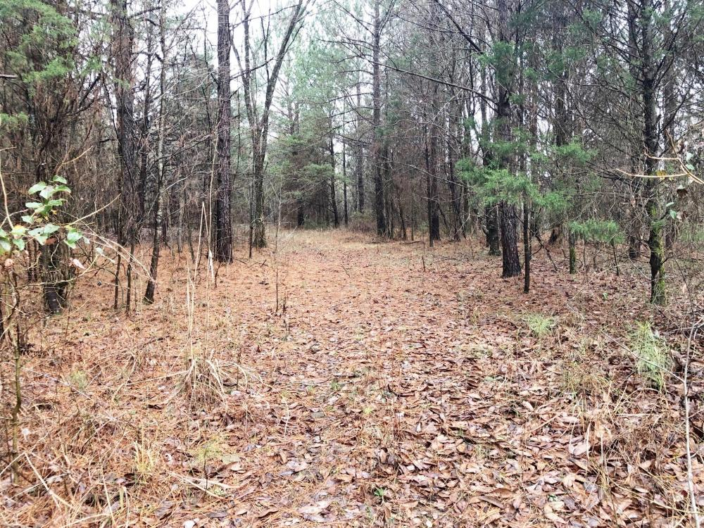 Bull Skull Road Homesite and Recreation in Colbert County