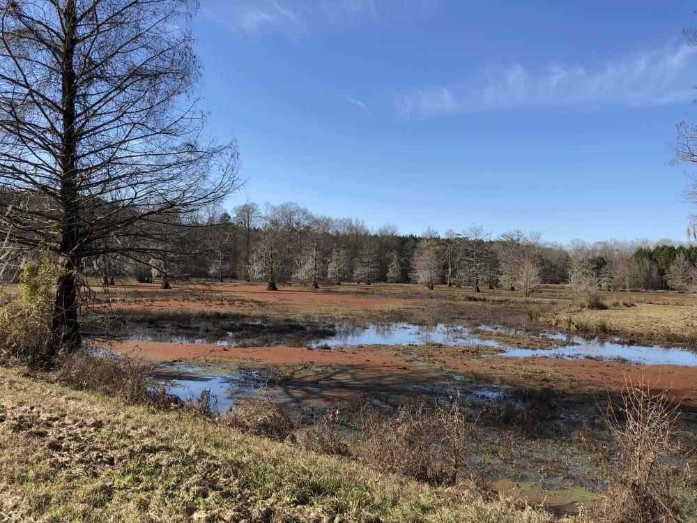 Pearl River Retreat Lot 16 in Lawrence County, MS