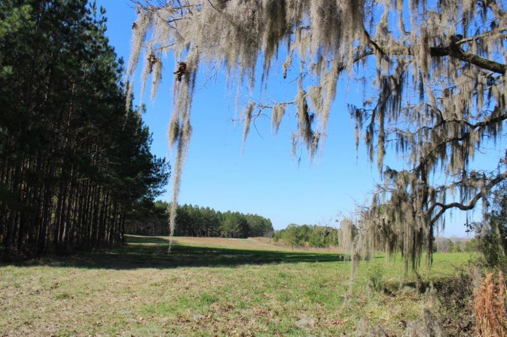 The Pinchony Creek Farm in Lowndes County, AL