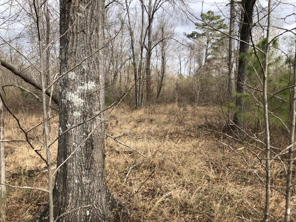 Chelsea Road Homesite in Shelby County, AL