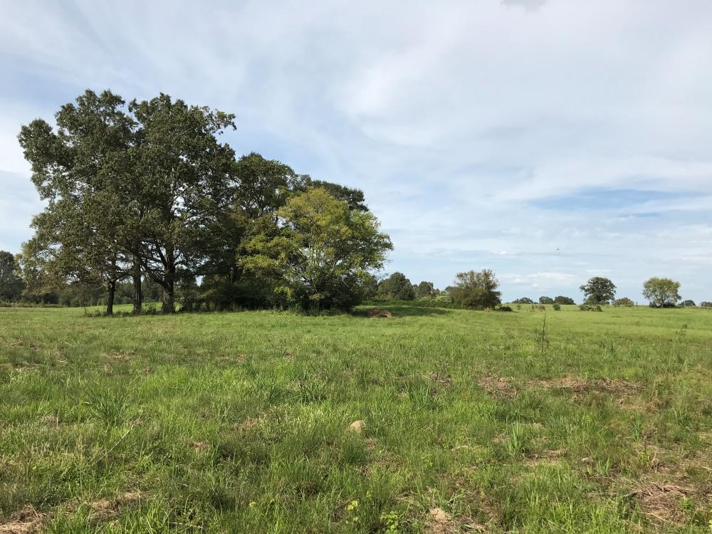 Cattle and Horse Farm with Hunting Near Jackson  in Copiah County, MS