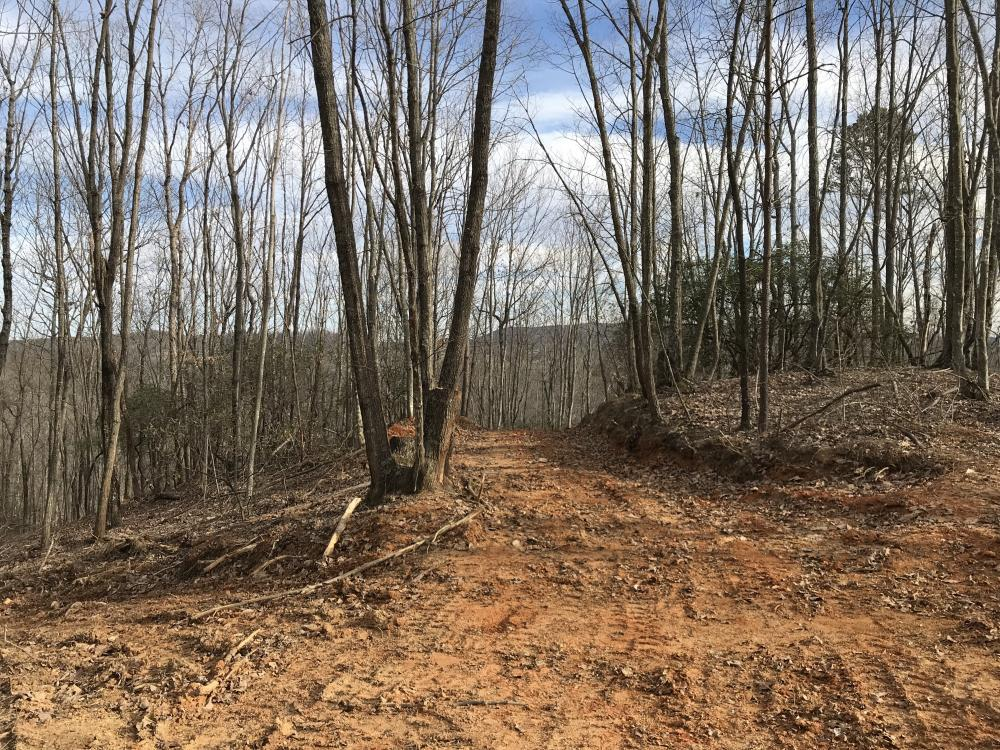 Alexander County Timber and Hunting Tract in Alexander County, NC