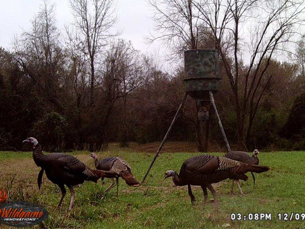 Bogue Homa Creek Camp and Hunting Tract in Perry County, MS
