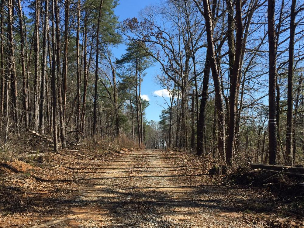 Co Rd 86 Pasture Hunting or Recreational Tract in Shelby County, AL