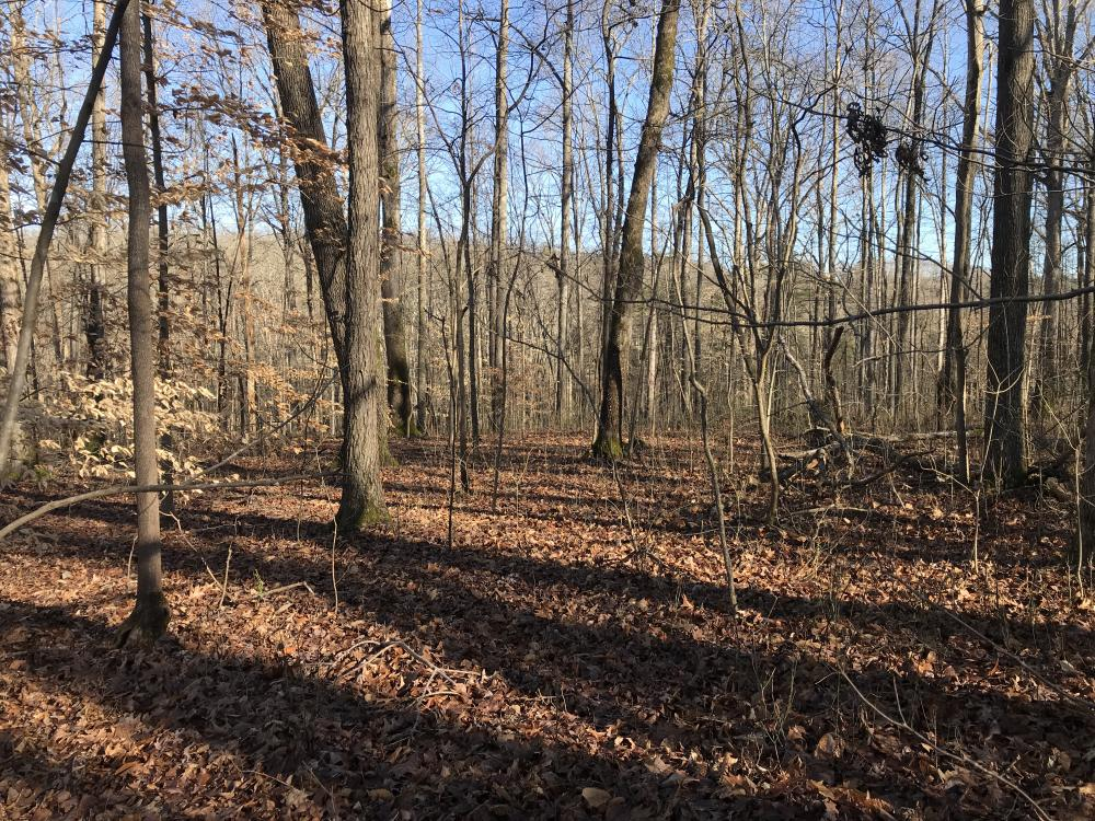 Loudon County Residential Lot in Loudon County, TN