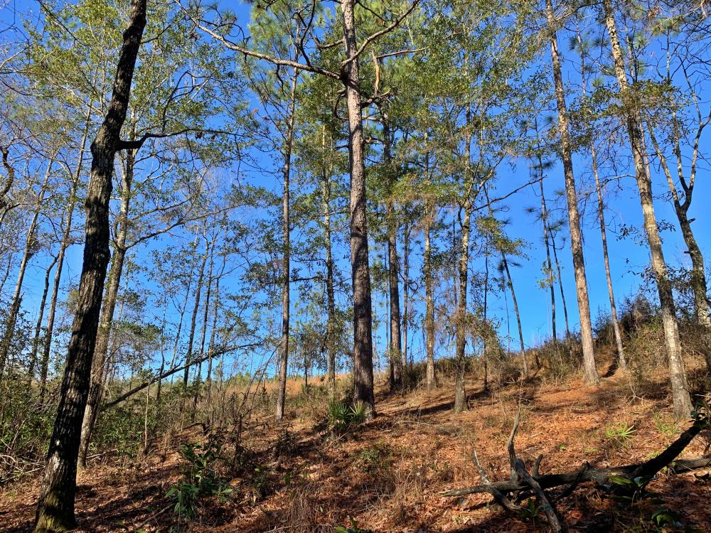 Old Citronelle Road Homesite Tract B in Mobile County, AL