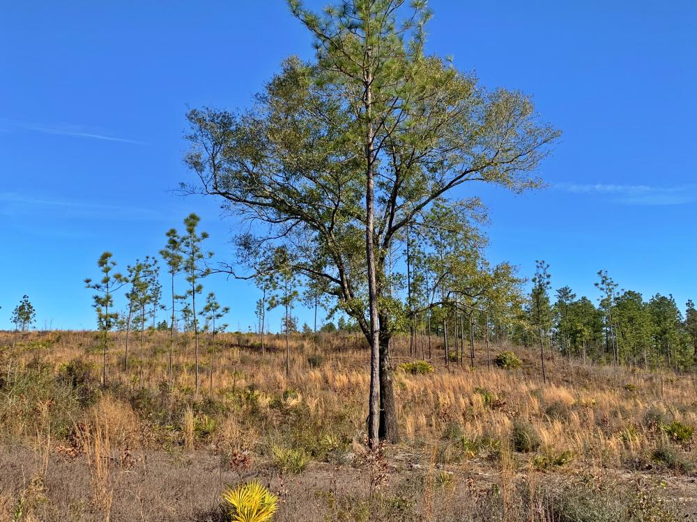 Old Citronelle Road Homesite Tract C in Mobile County, AL