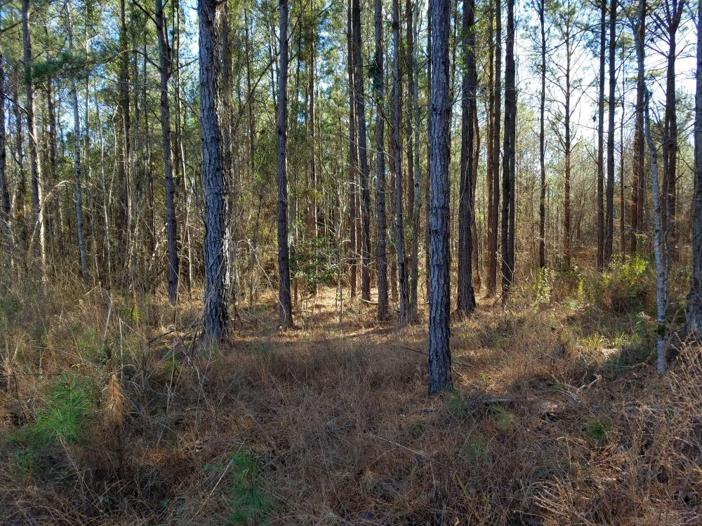 Perote Timber & Hunting Tract in Bullock County, AL