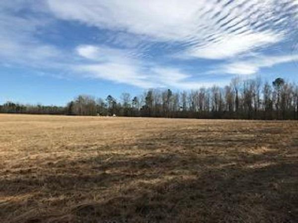 Colburn Recreational Tract, Farm, Deer, Turkey, Dove and Waterfowl in Dillon County, SC