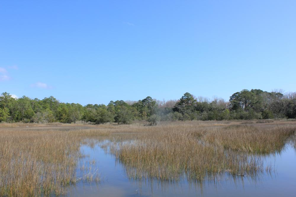 Toogoodoo 5+ Acre Homesite in Charleston County, SC
