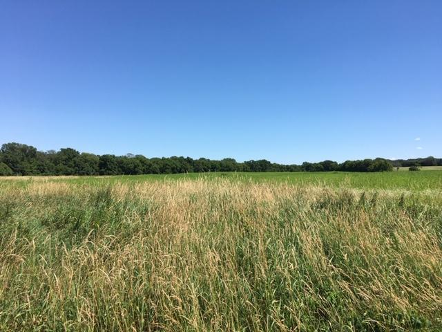 Farmland/Income-Producing/Investment Property, Rochester - Parcel 2 (60.19 Ac) in Olmsted County, MN