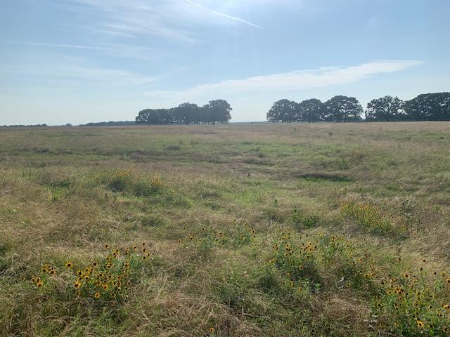 20 Acres in Mabank ISD, Agriculture Opportunities, Scenic Meadow in Kaufman County, TX