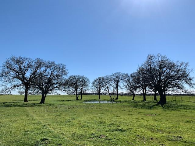 20 Acres near Mabank, Scenic Farm Land with Barn and Scattered Trees in Kaufman County, TX