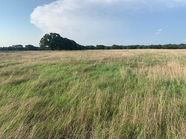 20 Acres North of Mabank, Scenic Pasture Property in Kaufman County, TX