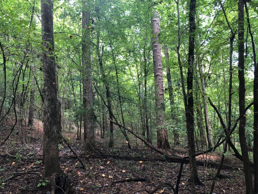 Evergreen Hunting/Timberland Investment in Conecuh County, AL