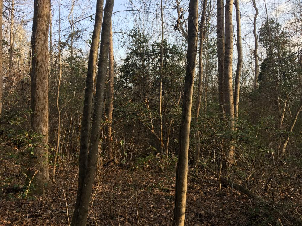 Moonville Wooded Homesite in Greenville County, SC