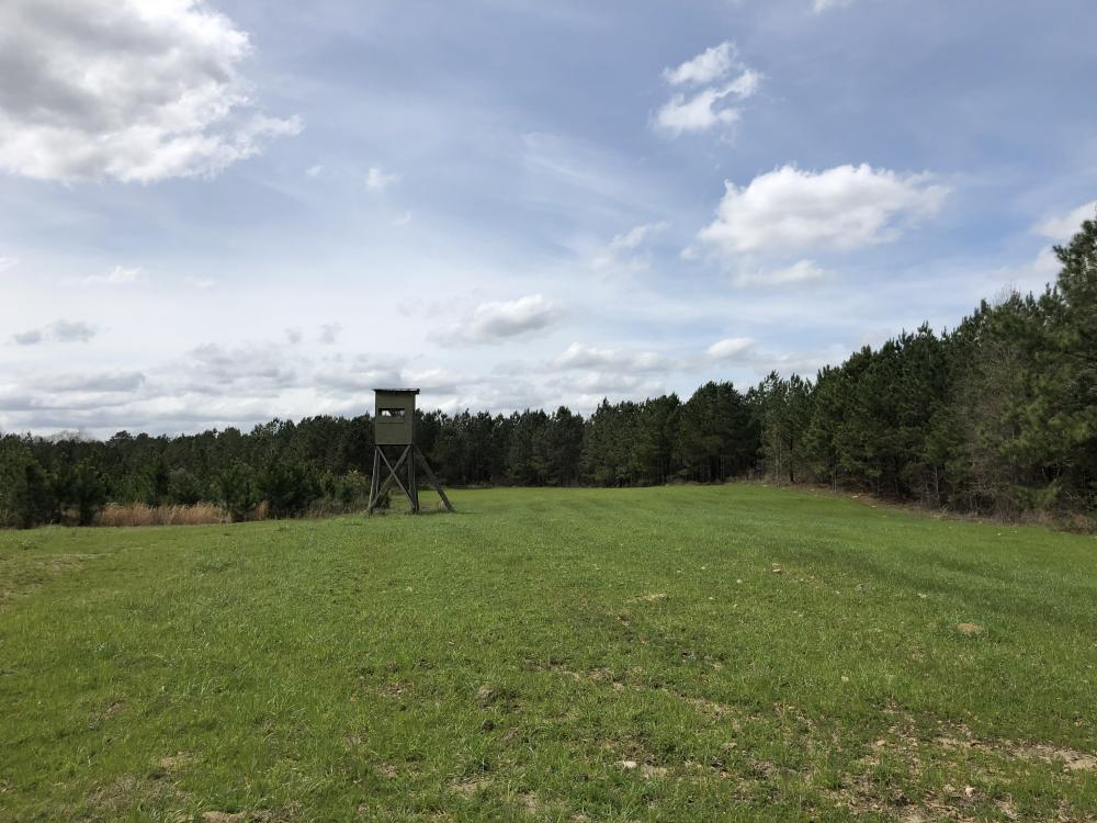 Lake Martin 450 Hunting and Timber Investment in Elmore County, AL