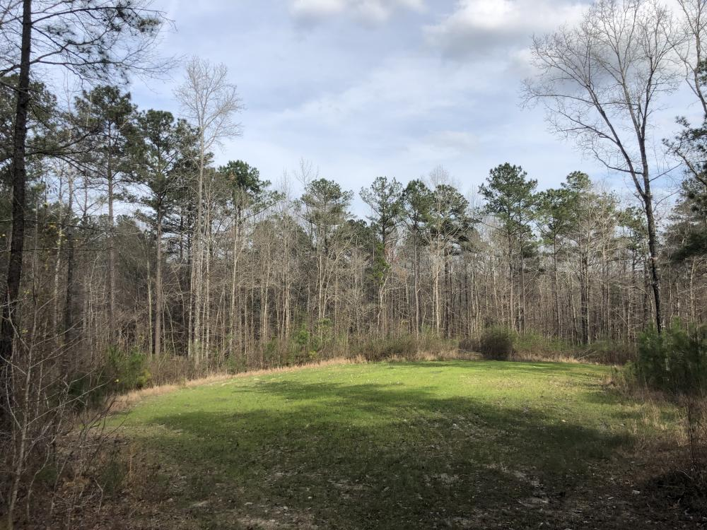 Eclectic  33  Homesite and Timber in Elmore County, AL
