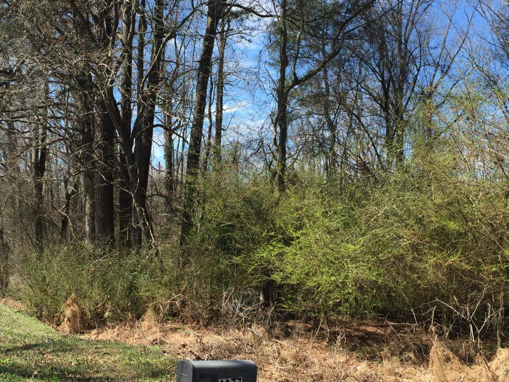 Unrestricted Kenly Wooded Lot in Wilson County, NC
