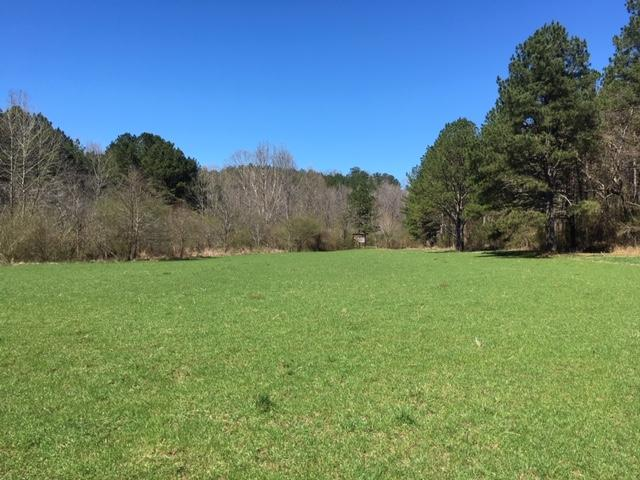 Cahulga Creek Recreation & Timber Tract in Cleburne County, AL